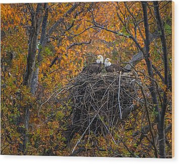 Bald Eagles Nest In Fall Wood Print