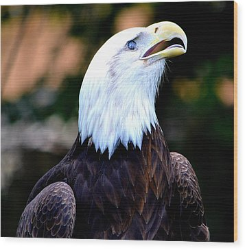Wood Print featuring the photograph Bald Is Beautiful by Deena Stoddard