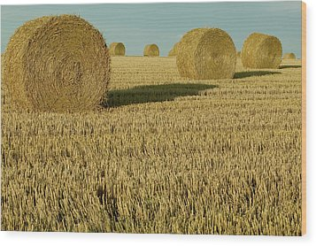 Bales Of Grain At Harvest Time Wood Print by Cyril Ruoso