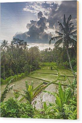 Bali Rice Terraces Wood Print by Didier Marti