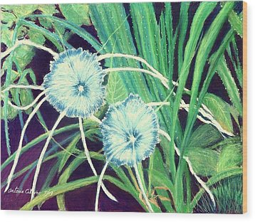 Bali White Spider Lily's  Pastel Wood Print by Antonia Citrino