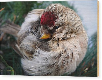 Ball Of Feathers Wood Print by Christina Rollo
