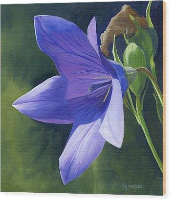 Balloon Flower Wood Print by Alecia Underhill
