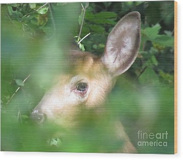 Bambi In The Woods Wood Print by David Lankton