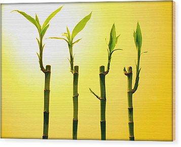 Bambo Wood Print by Mechi