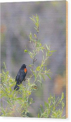 Bamboo And Bird Wood Print