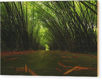 Bamboo Cathedral Wood Print by Dexter Browne