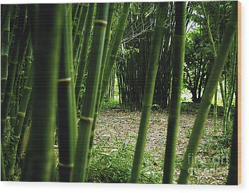Bamboo Forest Wood Print by Andres LaBrada