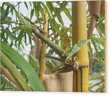 Bamboo  Wood Print by Heather Duncan