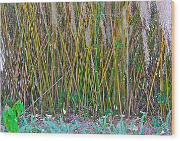 Wood Print featuring the photograph Bamboo by Lorna Maza