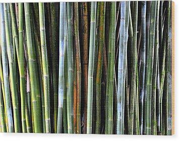 Wood Print featuring the photograph Bamboo Rainbow by Jodi Terracina