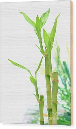 Bamboo Stems And Leaves Wood Print by Olivier Le Queinec