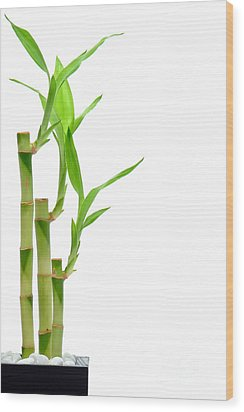 Bamboo Stems In Black Vase Wood Print by Olivier Le Queinec