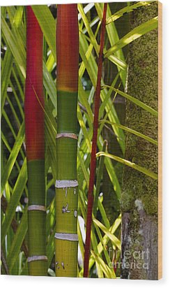 Bamboo Too All Profits Go To Hospice Of The Calumet Area Wood Print