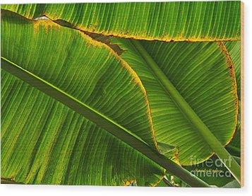 Banana Leaves Wood Print