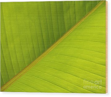 Banana Leaf Diagonal Pattern Close-up Wood Print by Anna Lisa Yoder