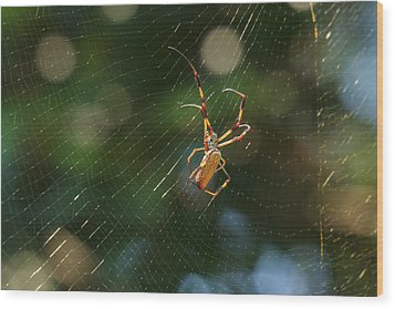 Banana Spider In Web Wood Print by Patricia Schaefer