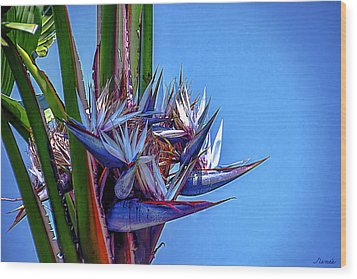 Banana Tree Daylight 3 Wood Print