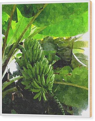 Banana Trees Wood Print by Lanjee Chee