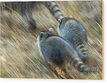 Bandits On The Run Wood Print by Kate Brown