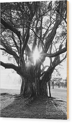 Banyan Tree Wood Print by Alison Tomich