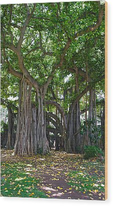 Banyan Tree At Honolulu Zoo Wood Print