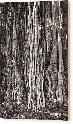 Banyan Tree Wood Print by James David Phenicie