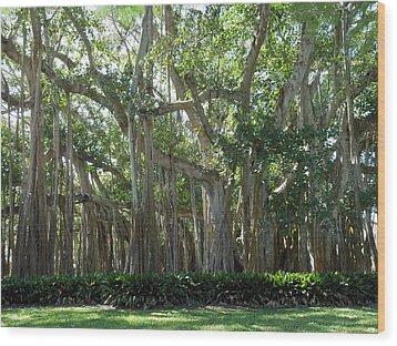 Banyan Tree Wood Print by Kay Gilley
