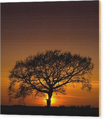 Baobab Wood Print by Davorin Mance