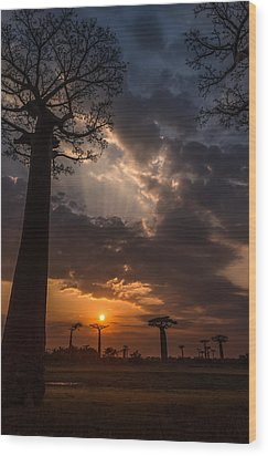 Baobab Sunrays Wood Print