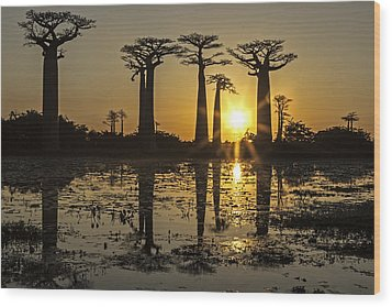 Wood Print featuring the photograph Baobab Sunset by Judi Baker