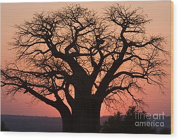 Wood Print featuring the photograph Baobab Tree Sunset by Chris Scroggins