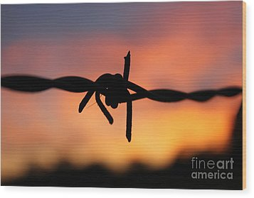 Wood Print featuring the photograph Barbed Silhouette by Vicki Spindler