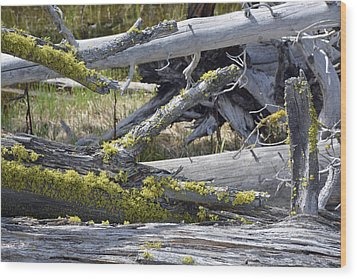 Bare Logs And Lichen In Yellowstone Wood Print by Bruce Gourley