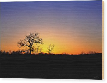Bare Oak In Spring Sunset Wood Print