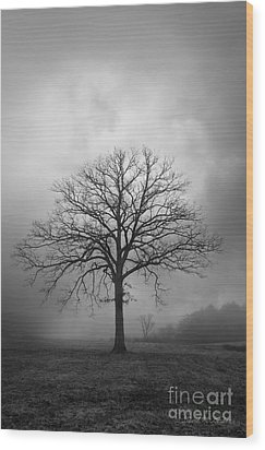 Bare Tree And Clouds Bw Wood Print