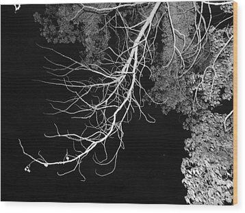 Bare Tree Branch Wood Print