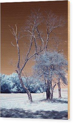 Bare Tree Cahokia Wood Print by Bob Pomeroy