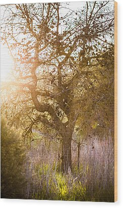 Bare Tree Wood Print by Mike Lee