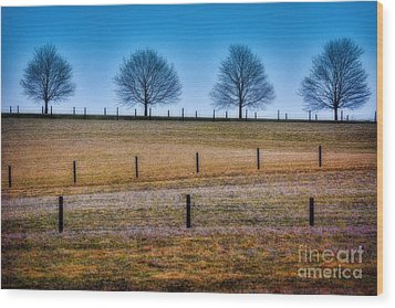 Bare Trees And Fence Posts Wood Print by Henry Kowalski
