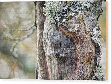 Bark And Bokeh Wood Print by Chris Anderson