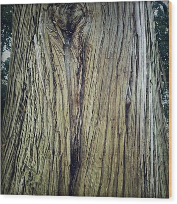 Bark Wood Print by Les Cunliffe