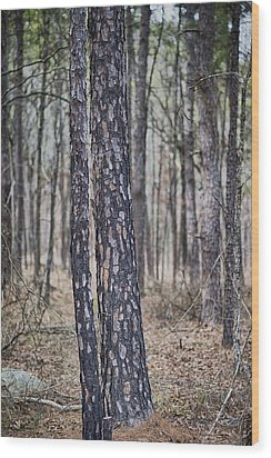 Wood Print featuring the photograph Bark by Yvonne Emerson AKA RavenSoul