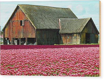 Barn And Tulips Wood Print by Annie Pflueger