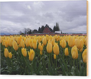 Barn And Yellow Tulips Wood Print by Karen Molenaar Terrell