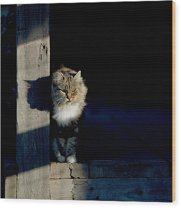Barn Cat Wood Print by Art Block Collections