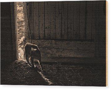 Barn Cat Wood Print by Theresa Tahara