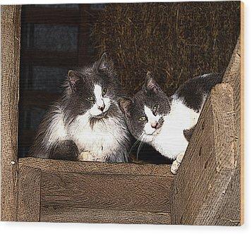 Barn Cats Wood Print by TnBackroadsPhotos