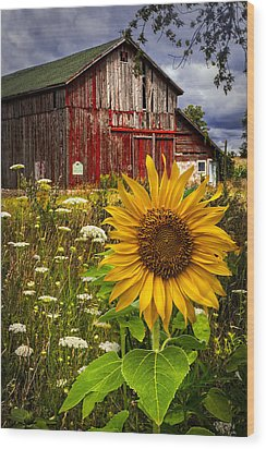 Barn Meadow Flowers Wood Print by Debra and Dave Vanderlaan