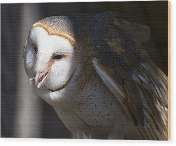Barn Owl 1 Wood Print